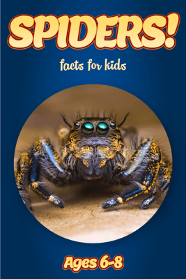Facts About Spiders For Kids 6-8 - Cindy Bowdoin
