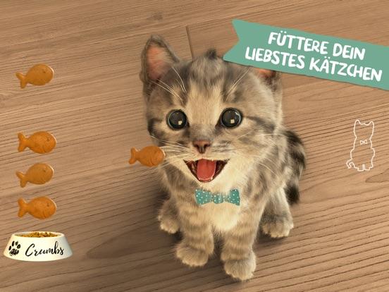 Kleines Kätzchen - meine Lieblingskatze Screenshot