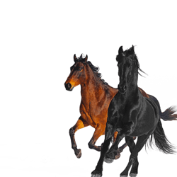 Old Town Road (feat. Billy Ray Cyrus) [Remix] - Old Town Road (feat. Billy Ray Cyrus) [Remix] mp3 download