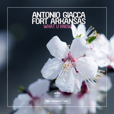 What U Know - Antonio Giacca & Fort Arkansas mp3 download