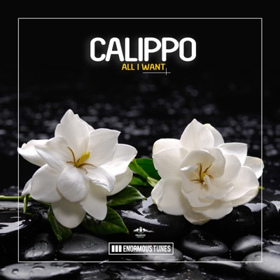 All I Want - Calippo mp3 download
