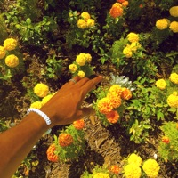 Peach Fuzz - Single - Tyler, The Creator mp3 download