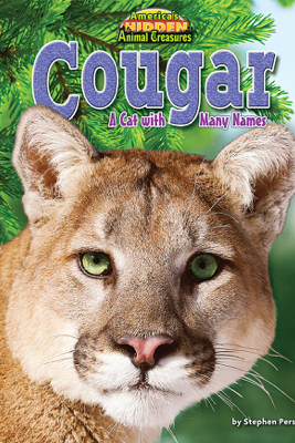 Cougar - Stephen Person