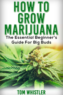 How to Grow Marijuana : The Essential Beginner's Guide for Big Buds - Tom Whistler
