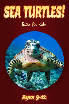 Sea Turtle Facts For Kids 9-12 - Cindy Bowdoin