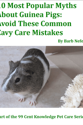 10 Most Popular Myths About Guinea Pigs: Avoid These Common Cavy Care Mistakes - Barb Nefer