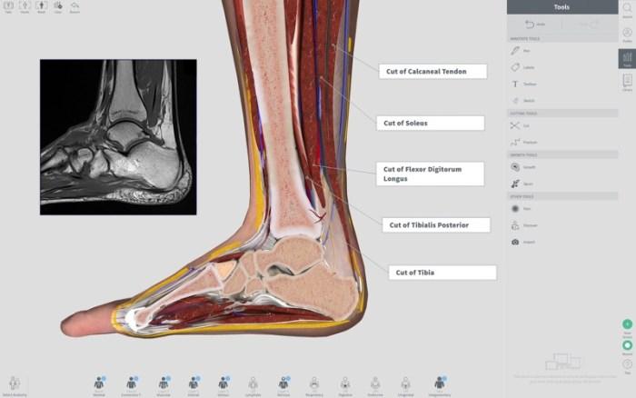 3_Complete_Anatomy_2018_Courses.jpg