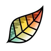 Pigment – Ausmalbuch für Erwachsene