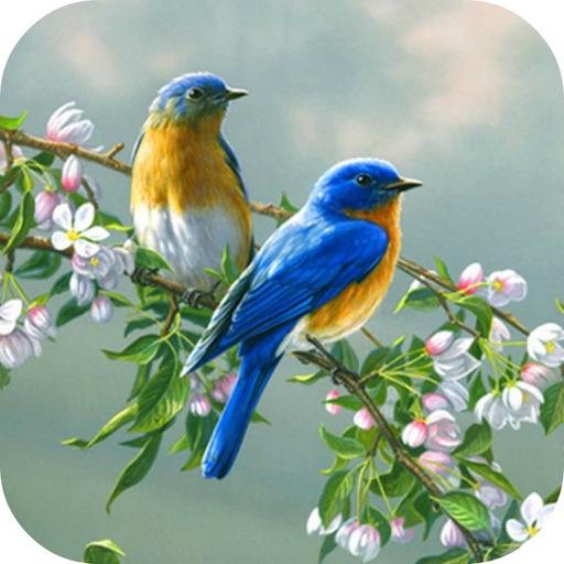 birds wallpaper singing birds