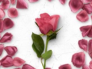 flower greetings rose bundle