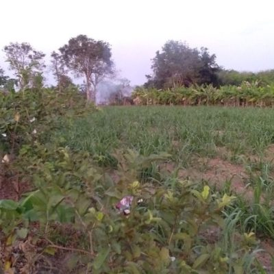 Buriram Land and Building Plot 7 Rai