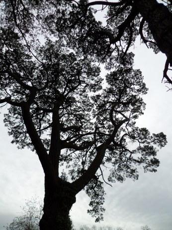 Trees at Quarr Abbey