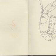 2014_06_lafayette-crab