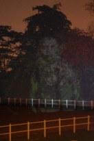 Buang in Bukit Timah II