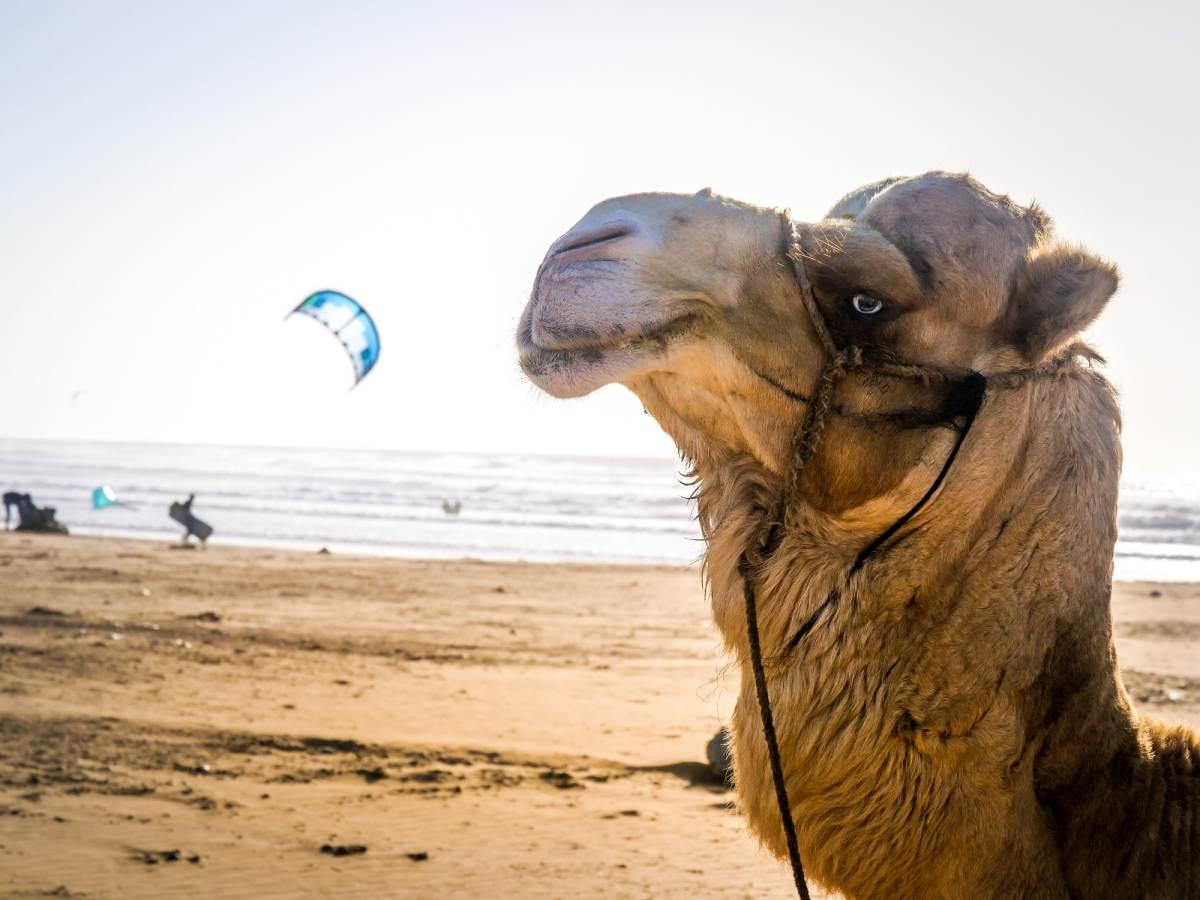 Kitesurf à Essaouira - Maroc