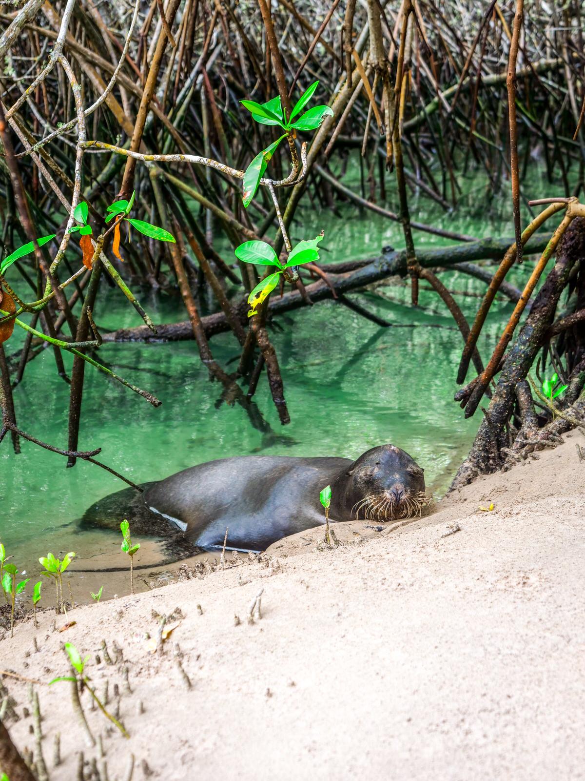 Galapagos Isabela Equateur