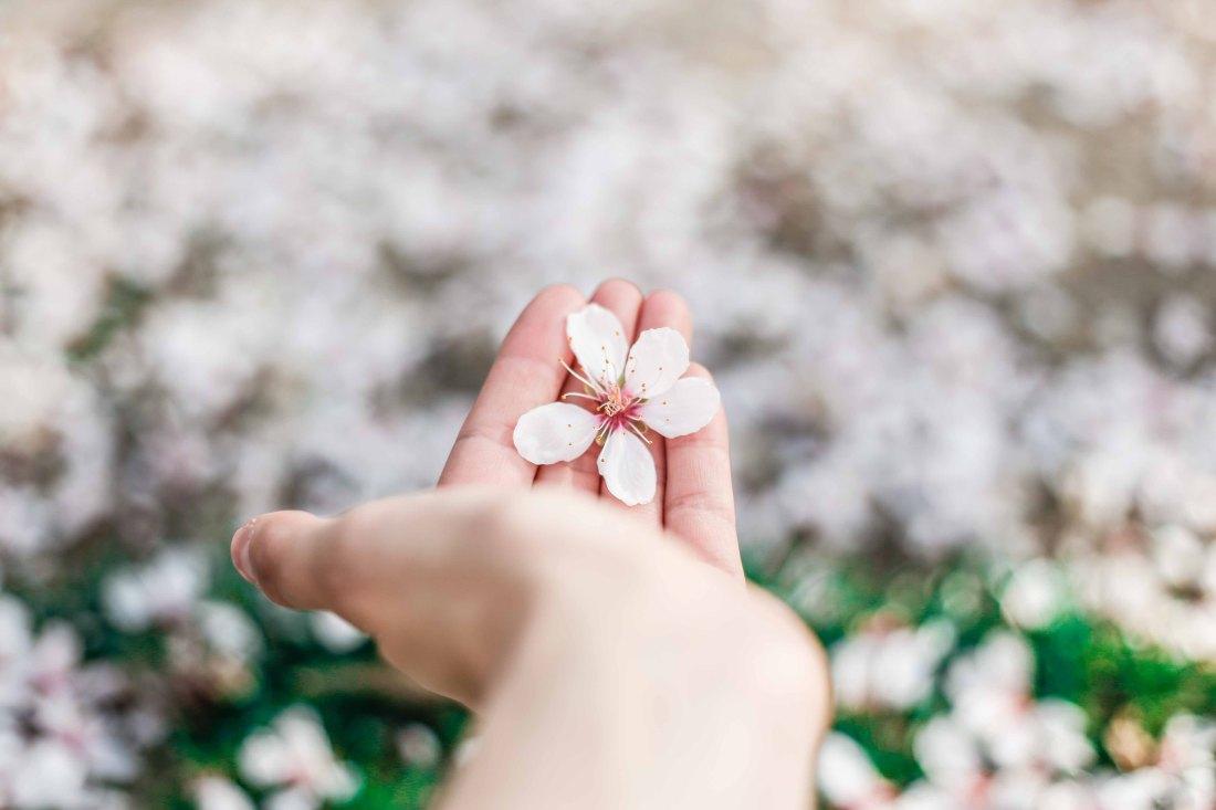 Fases y transiciones de vida – Primavera