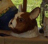 tête de bouledogue blanc marron
