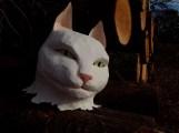 tête de chat blanc