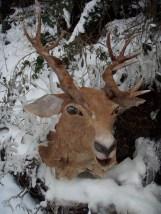 t^te de cerf dans la neige