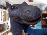 tête d'hippo