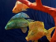 série poissons en papier de soie , corail musical