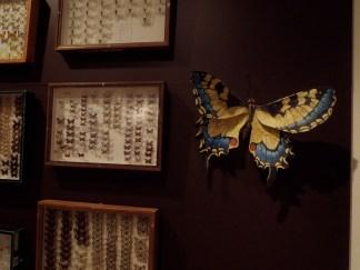 grand machaon en papier et collection papillons
