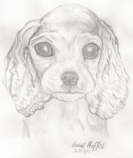 Puppy in Pencil