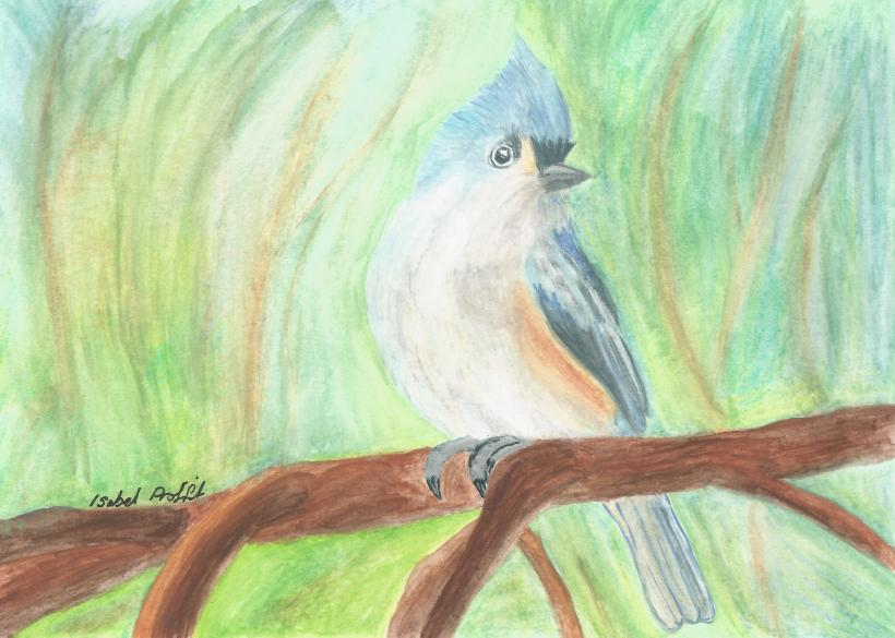 Watercolour pencil bird picture