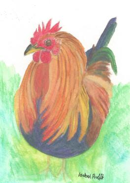 Watercolour pencil painting for a card
