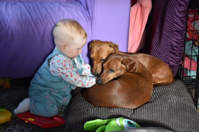 Our baby Isabelle with our two dogs