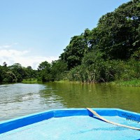 Wanderlust Rainforest