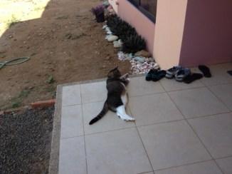 "I think she has decided her new ""casa es muy bueno""!"