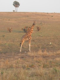 Giraffes were probably my favorite sight to see!