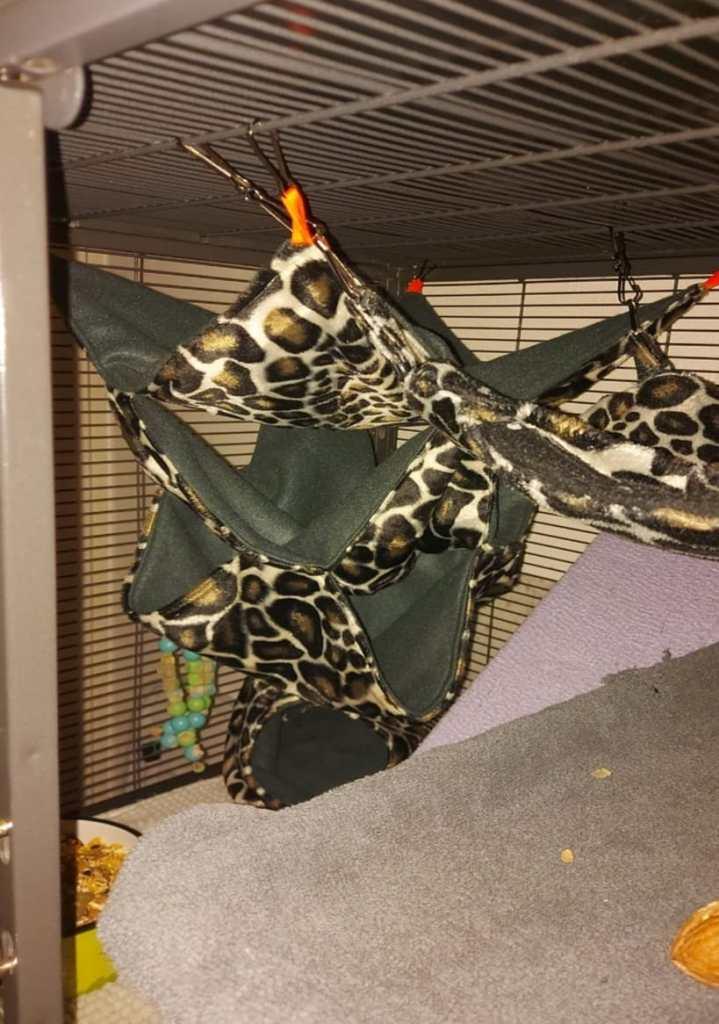 Chewies hammocks