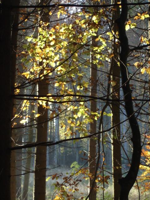 automne, Gemmell 056