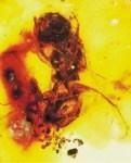 ハチの化石の記事2題