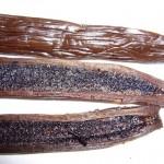 Vanilla-Pods-6-150x150
