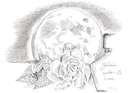 Gardenia_sketch_Sotto_la_Luna