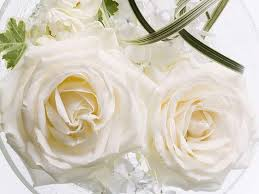 valentinehgwite roses