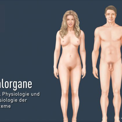titel-sexualorgane