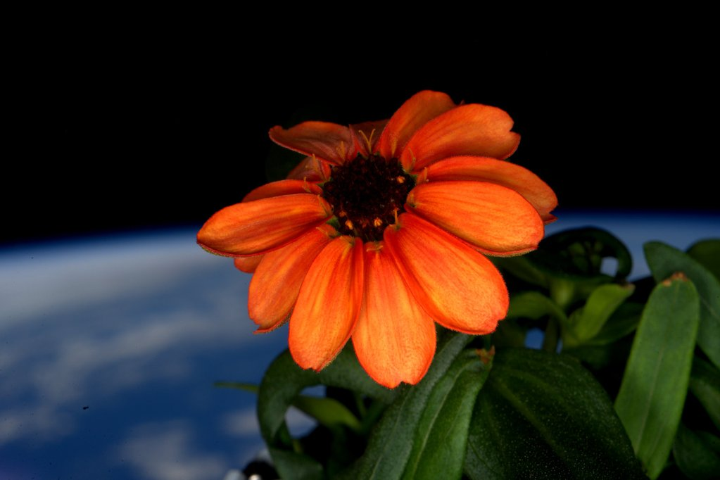 orange space flower with earth in background