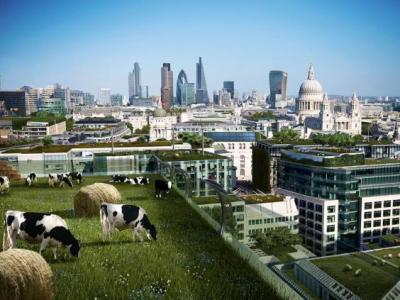 depiction of cows on rooftops in London