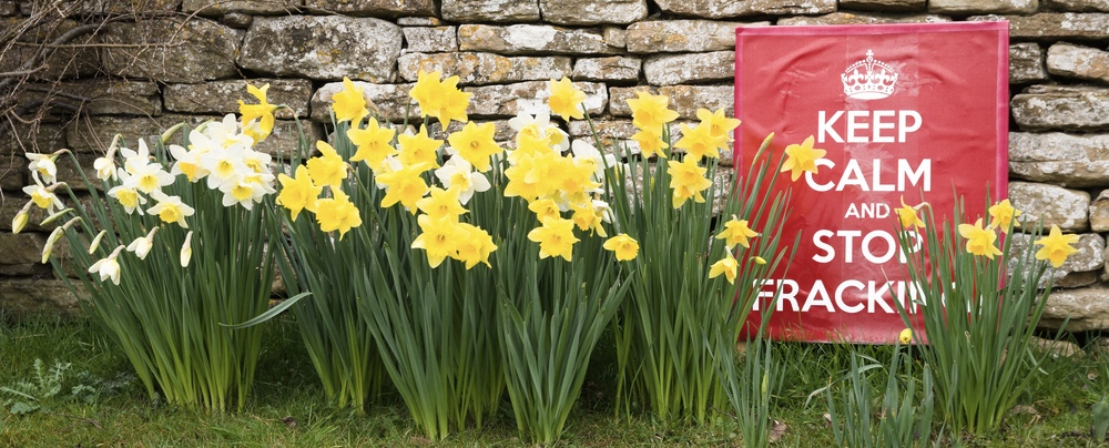 stop fracking sign with daffodils
