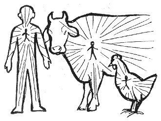 What is Cow Protection?
