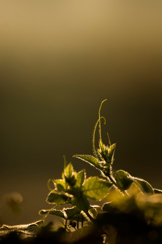 ..basking in the golden rays of the morning..