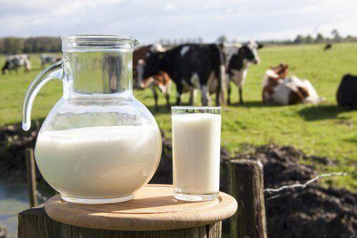 Αποτέλεσμα εικόνας για Αγελαδινού Γάλακτος
