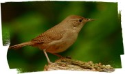 web house wren rob paine