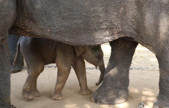 elephants wordless