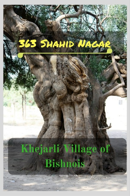 Khejarli Village of Bishnois